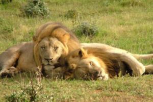 suedafrika_tour1-2